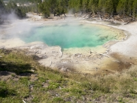 Yellowstone_Norris Geyser Basin-1030592