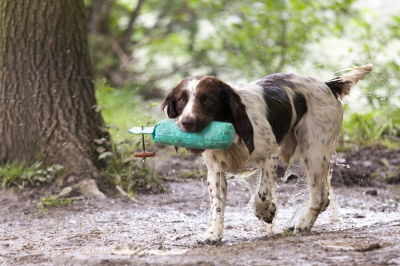 Chatsworth gun dog trials 2014