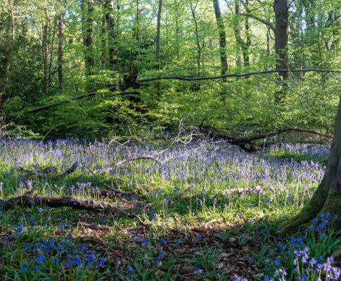 Early Spring in Ecclesall Woods
